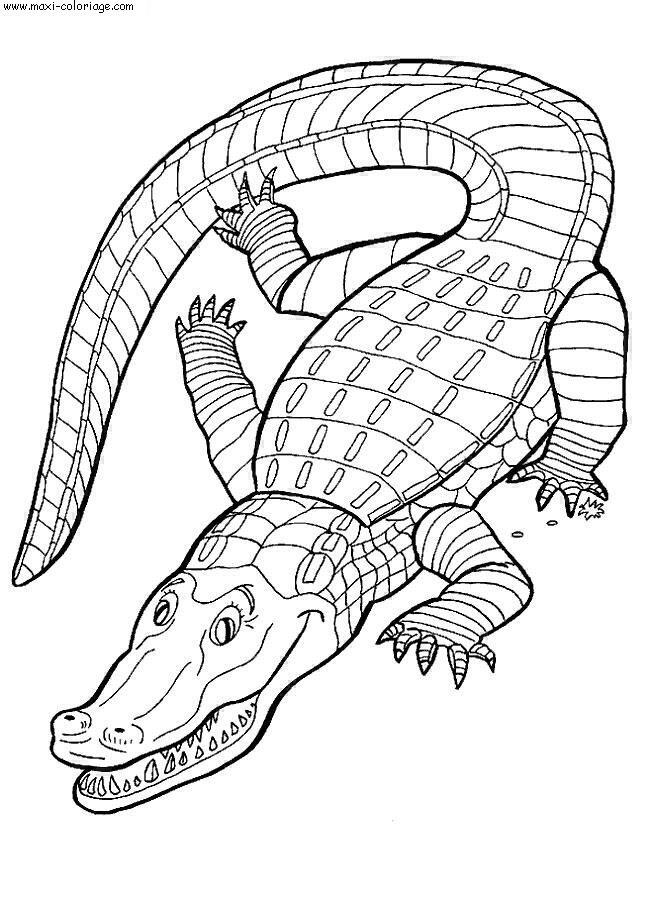 coloriage Crocodiles