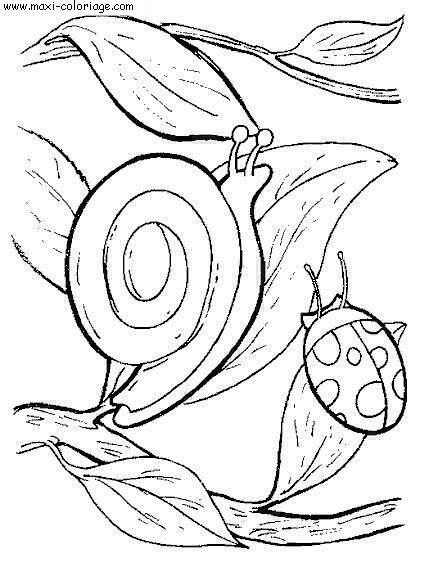 Coloriage gratuit escargots dessin gratuit escargots escargots coloriage n 4355 - Maxi coloriage ...
